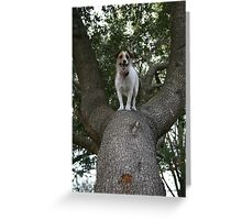 Missy the tree climber Greeting Card