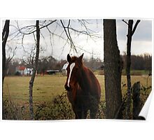 Beautiful Horse At The Fence 2 Poster