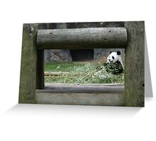 Panda at the Atlanta Zoo Greeting Card