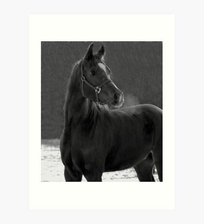 Stash IN Black And White Art Print