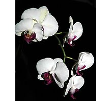 Orchids Abound Photographic Print