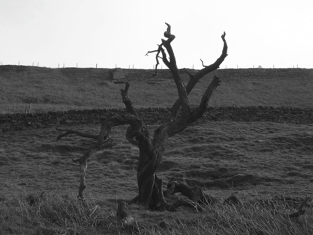Spooky Tree by skaranec1981