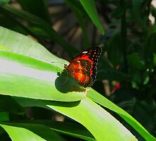 Butterfly by Judy Gayle Waller
