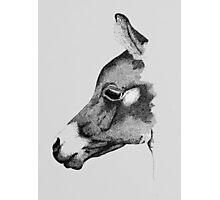 Arab Foal Photographic Print