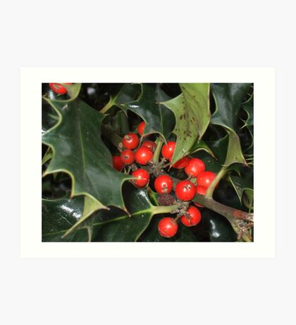 holly berries Art Print