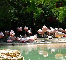 Flamingoes by Cathy Jones