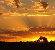"""Godlight"" Morning by bushdrover"
