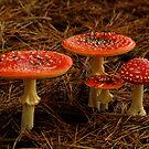 Fungi by Joe Mortelliti