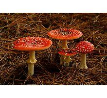 Fungi Photographic Print