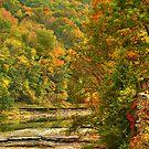 Autumn by Tim Yuan