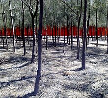 the red fence by Anthony Mancuso