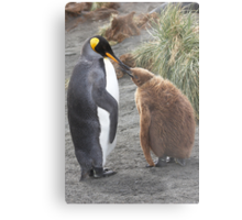 King Penguin and chick ~ Meal Time Metal Print