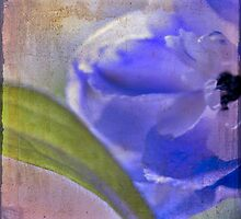 delphinium blue by SharonLea