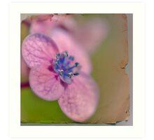 flower-pressing Art Print