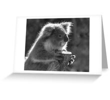 Young Koala BW Greeting Card