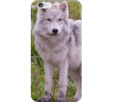 They're Growing - Arctic Wolf Pups  iPhone Case/Skin