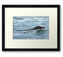 The Hooker's - Sealion - Kaka Point - New Zealand Framed Print