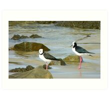 Powered Spring Stilts! - Pied Stilt - Kaka Point - NZ Art Print