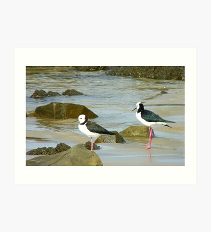 Powered Spring Stilts! - Pied Stilt - Kaka Point - NZ Art Print