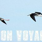 Bon Voyage - Greeting Card - NZ by AndreaEL