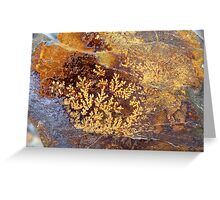 Rock Fossils - Kaka Point - Southland NZ Greeting Card