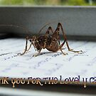 Thank You For The Lovely Card - Weta - NZ by AndreaEL