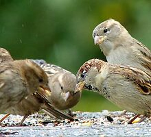 Buffet Lunch! - Sparrows - NZ by AndreaEL