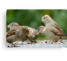 Buffet Lunch! - Sparrows - NZ Canvas Print