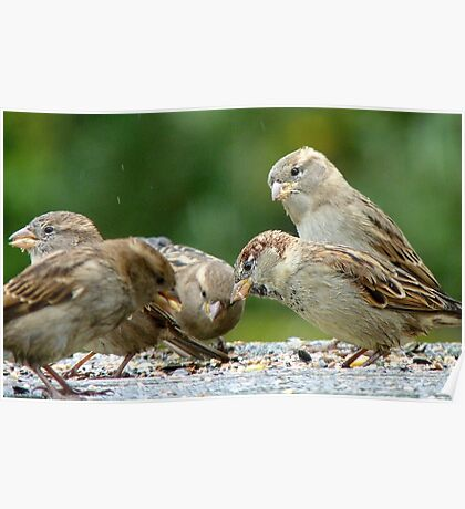Buffet Lunch! - Sparrows - NZ Poster