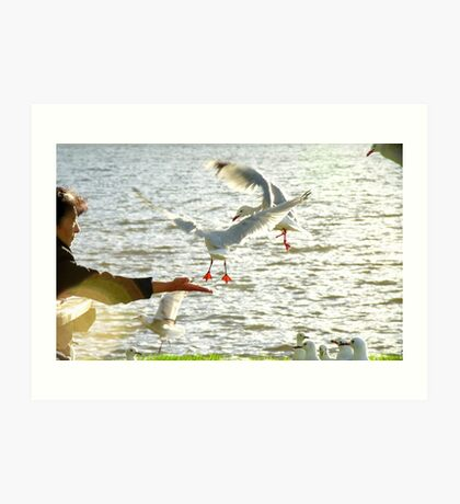 In Tune And In Touch With Nature - Seagulls - NZ Art Print