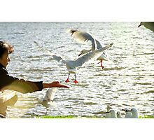 In Tune And In Touch With Nature - Seagulls - NZ Photographic Print