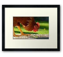 Ferdinand The Bull! - Rooster - Southland NZ Framed Print