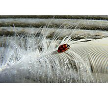The Lady And The Feather - Ladybird Photographic Print