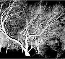 Spirit Grove by Julié Pearce