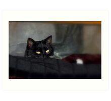 Black Is Black - Gypsy Cat - NZ Art Print