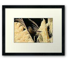 A Pampas Display - Black Fantail (Morph) - Dunedin Otago NZ Framed Print