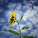 Reach for the sky - Let nothing deter you by Clare Colins