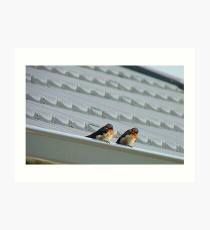 Welcome Home Honey! - Swallows - Dunedin NZ Art Print
