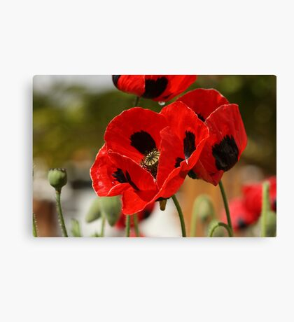 Dancing Poppies Canvas Print