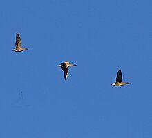 Geese by Kenart