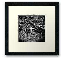 Pine Tree Framed Print