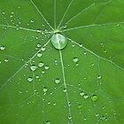 Nasturtium drops by brilightning
