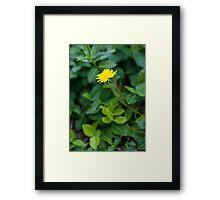 A Dandelion in the Spring Framed Print