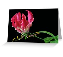 Flame Lilly Greeting Card