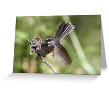 Grey Fantail ~ Come on ... flap like this baby !!  Greeting Card
