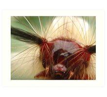 hairy caterpillar Art Print