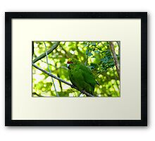 Balance & Harmony! - Yellow Headed Kakariki - Orana Wildlife Park CHC NZ Framed Print