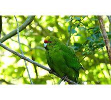 Balance & Harmony! - Yellow Headed Kakariki - Orana Wildlife Park CHC NZ Photographic Print
