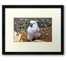 Hey, I Have A All In One Jump Suit! - Cockatoo - Southland NZ Framed Print