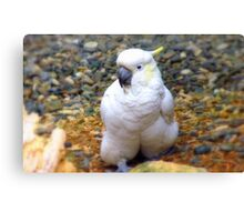 Hey, I Have A All In One Jump Suit! - Cockatoo - Southland NZ Canvas Print